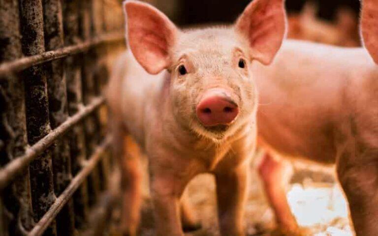 Four Star Veterinary Service Pork Industry Conference postponed until July 21; same place, same speakers