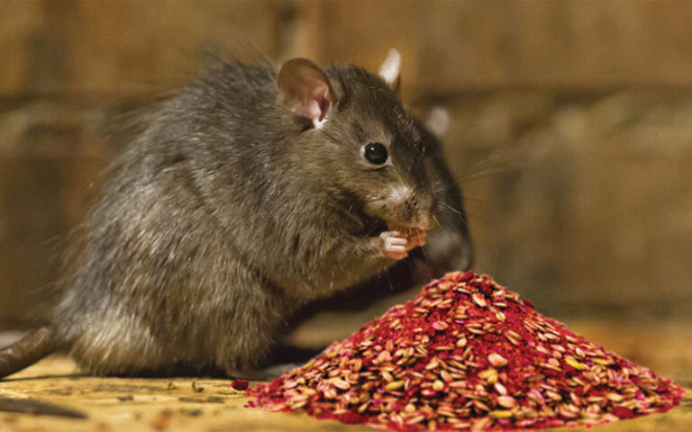 Don't forget rodent, insect control during biosecurity checks